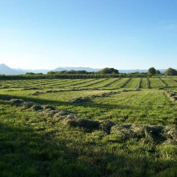 Pature in hay