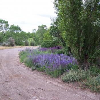 Floral Driveway